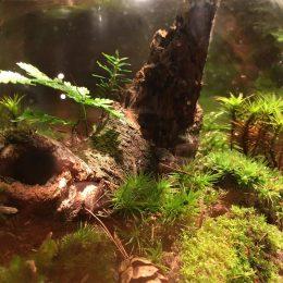 ForestJars-1x1-01